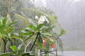 Какие преимущества у сезона дождей?